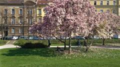 Magnolia tree at King Tomislav Square in Zagreb Stock Footage