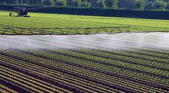 automatic irrigation system for a field of salad - stock photo