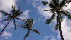 Palm Tree Time Lapse Video Stock Footage