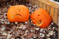 Pumpkins in compost bin - stock photo