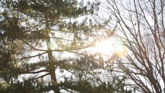 Bare Trees In Winter Snow - stock footage