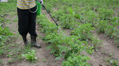 Farmer spraying with pesticides potato from pests Stock Footage