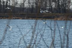 River gulls Stock Photos
