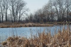 river gulls - stock photo