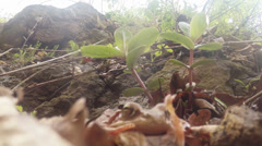 Grass frog female Stock Footage