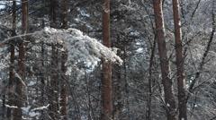 Branch under snow Stock Footage