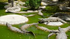 Crocodile Farm Stock Footage