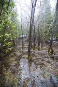Flooded forest after rain Stock Photos