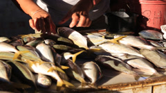 Sale of fish and seafood in market. Coron Island, Philippines Stock Footage