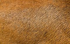 Animal Hair Texture - stock photo