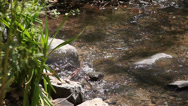Stock Video Footage of Cyrstal clear stream flowing (realtime)