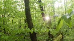 The sun shines through the young foliage of the trees in the mountain forest Stock Footage