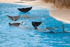 dolphins wawing - stock photo