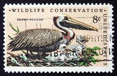 Postage stamp USA 1972 Brown Pelican, Bird - stock photo