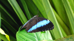 Tropical butterfly Stock Footage