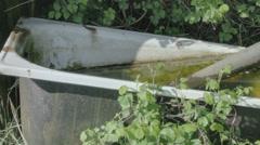 Dirty Hoarder Algae Bath Tub - 29,97FPS NTSC Stock Footage