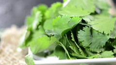 fresh coriander (loopable) - stock footage