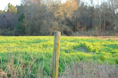 worn fense post at the edge of a rye field - stock photo