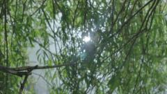 Sun Reflection in Pond through Weeping Willow Tree Lense Flare - 29,97FPS NTSC Stock Footage