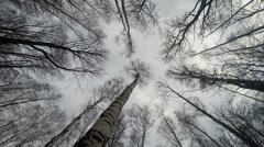 Tree Tops Stock Footage