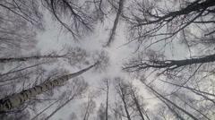 Around Trees - stock footage