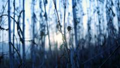 Grass field. sunset background. blurry blurred. nature agriculture Stock Footage