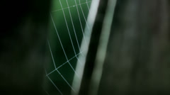 Cobweb Trembling in Wooden Frame - 29,97FPS NTSC Stock Footage