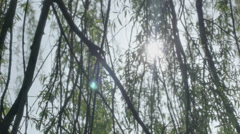 Stock Video Footage of Sunlight Lens Flare Weeping Willow Branches - 29,97FPS NTSC