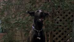 Slow Motion - Black Dog Catching Treat Stock Footage