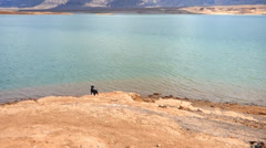 Dog Overlooking Lake Meade Stock Footage