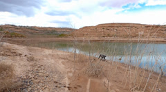 Black Dog Explores the Shores of Lake Meade Stock Footage