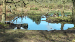 Reflection of trees in marsh water, wirral, England circa april 2014 Stock Footage