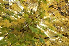 yellow and green leaves light crossed - stock photo
