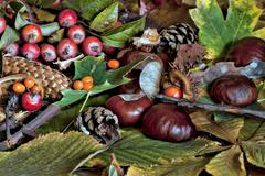 autumn scene with chestnuts, pine cones and underbrush - stock photo