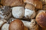 Stock Photo of close view of collected boletus edulis