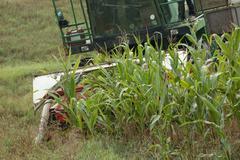 agricultural equipment  corn chopper cutting corn - stock photo