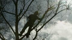 Arborist lumberjack in tree silhouetted by sun 02 4K Stock Footage