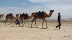 Bedouin boy leading a caravan of camels Stock Footage