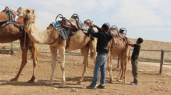 Two Bedouin teenagers preparing their camels Stock Footage
