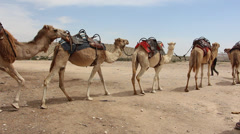 Row of camels Stock Footage