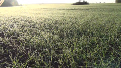 Panorama of winter crops cereal wheat covered melt morning rime Stock Footage
