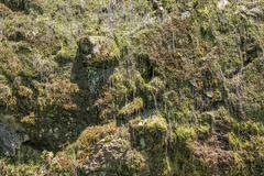 Mossy rock wall Stock Photos