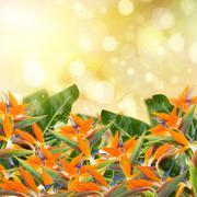 garden with strelitzia flowers - stock photo