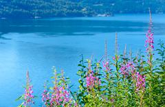 fjord summer hazy view (norway) - stock photo