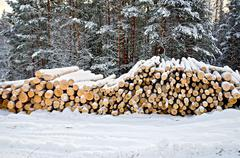 timber on snow in winter forest - stock photo