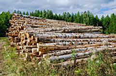 Trestle harvested wood Stock Photos