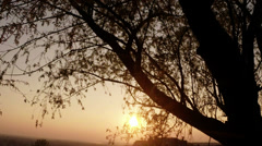Sunset through the leaves and branches of a willow Stock Footage