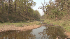 P03473 River at Kanha National Park Tiger Reserve Stock Footage
