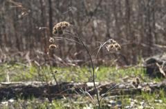 field prickles - stock photo