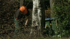 Arborist lumberjack cuts a wedge in the base of a tree 02 4K Stock Footage